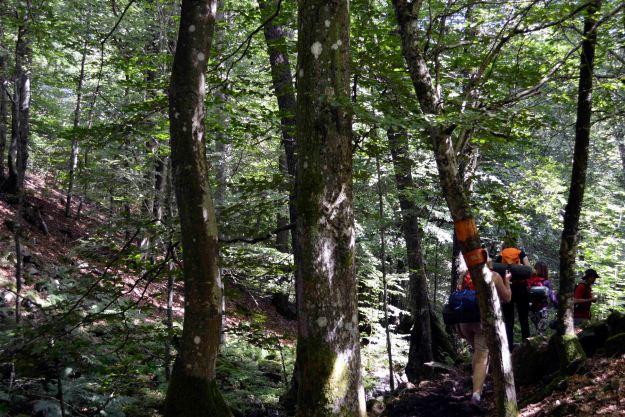 Following the orange path, we trekked through dense woodlands. Photo: Mick. 2015.